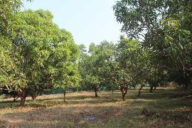 Agricultural Land for Sale in Mumbai | MagicBricks