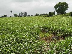 Agricultural Land for Sale in Bhopal   MagicBricks