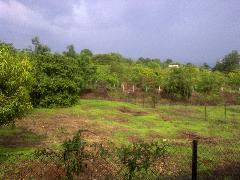 Agricultural Land for Sale in Mumbai   MagicBricks