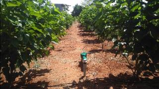 Agricultural Land for Sale in T N Pur, Mysore | Plots for Sale in