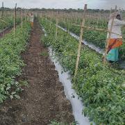 Agricultural Land for Sale in Nashik | MagicBricks
