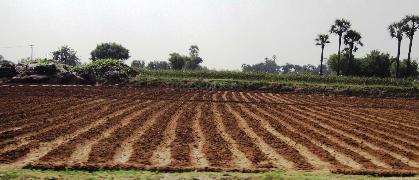 Agricultural Land for Sale in Bulandshahr | MagicBricks