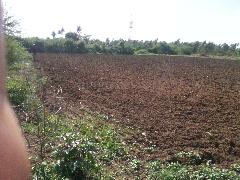 Agricultural Land for Sale in Bangalore | MagicBricks