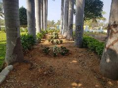 Residential Plots For Sale in Shamirpet Hyderabad - Buy