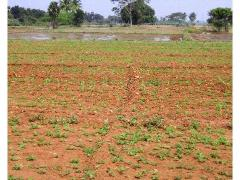 Agricultural Land for Sale in Allahabad | MagicBricks