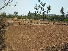 Agricultural Land for Sale in Kolhapur | MagicBricks