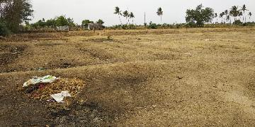 Agricultural Land for Sale in Trichy | MagicBricks