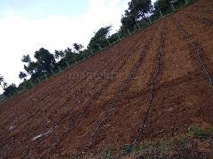 Goat Farming Project Report In Karnataka