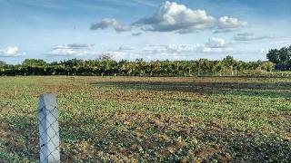 Agricultural Land for Sale in Nagpur | MagicBricks