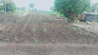 Agricultural Land for Sale in Pune | MagicBricks