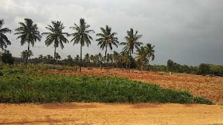 Agricultural Land for Sale in Hoskote, Bangalore | Plots for