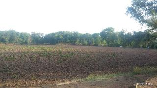 Agricultural Land for Sale in Vadodara | MagicBricks