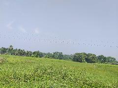 Industrial Land for Sale in Kolkata | MagicBricks